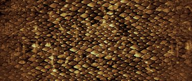 Snakeskin. Realistic looking snakeskin for fashion images background Royalty Free Stock Photography