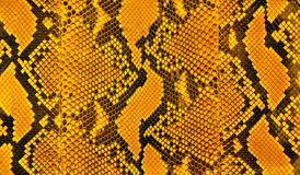 Snakeskin stripes pattern. Orange black and yellow stripes of snakeskin Stock Photo