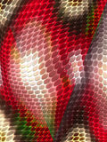 Snakeskin tekstura Obrazy Royalty Free