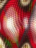 Snakeskin textur Royaltyfria Bilder