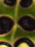 Snakeskin textur Arkivfoto