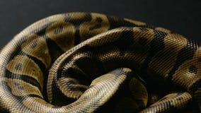 Snakeskin wzór pyton w cieniu zbiory