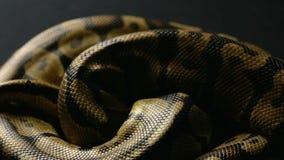 Snakeskin wzór w cieniu zbiory