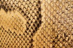 snakeskintexturer Royaltyfria Bilder