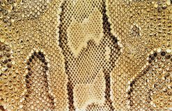 snakeskintexturer Arkivfoto