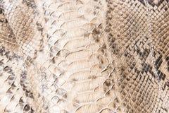 Snakskin läder Arkivfoto