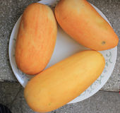 Snap melon. Phut, phoot, Cucumis melo subsp. agrestris var. momordica (syn: Cucumis momordica), a vine native to India, produces oval to cylindrical fruits royalty free stock photography