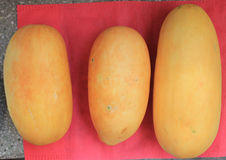 Snap melon. Phut, phoot, Cucumis melo subsp. agrestris var. momordica (syn: Cucumis momordica), a vine native to India, produces oval to cylindrical fruits stock photography