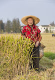 Snap portrait of a  harvesting senior woman Royalty Free Stock Photography