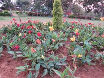 Close view of Colorful flowers at indian garden looking awesome. This snap is taken from kailashgiri park, a indian park looking awesome of flower garden Royalty Free Stock Photo