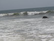 Close view of sea tide looking beautiful. This snap is taken RK Beach, Visakhapatnam. A Sea tide is coming to sea shore with a normal speed at sunny day Royalty Free Stock Photography