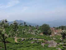 Awesome to view of tea garden from top of hill. This snap is from tea ooty india. Awesome tourist place that you always love that is so awesome Royalty Free Stock Photography