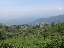 Tea garden top view looking awesome. This snap is from tea ooty india. Awesome tourist place that you always love that is so awesome Royalty Free Stock Photography