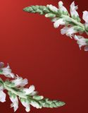 Snapdragon Border on Red Background Stock Images