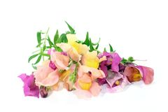 Snapdragon Royalty Free Stock Photography