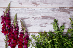 Snapdragon flowers bouquet arranged on wooden background. Snapdragon flowers and greens arranged on wooden background with space for text Royalty Free Stock Photo