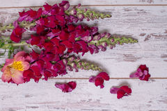 Snapdragon flowers bouquet arranged on wooden background. With space for text Stock Image