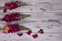 Snapdragon flowers bouquet arranged on wooden background. With space for text Stock Photography