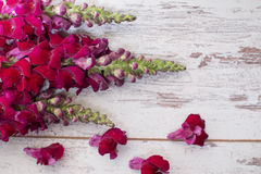 Snapdragon flowers bouquet arranged on wooden background. With space for text Stock Images