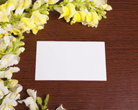 Snapdragon Frame with Flowers Stock Image