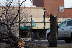 Snapped Tree. A snapped tree in Colorado Springs on January 9th, 2017 Stock Photography
