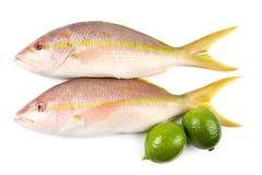 Snapper e calce gialli della coda Fotografia Stock