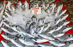 Snapper fish in ice on a market stall Royalty Free Stock Image