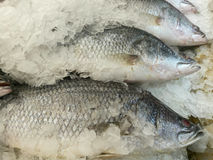 Snapper fish on ice at market Royalty Free Stock Images