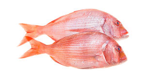 Snapper Fish Isolated. Fresh snapper fish isolated on white Stock Photography