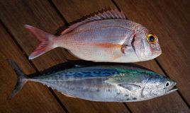 Snapper fish and little tunny tuna fish. Catch on wooden board stock photography