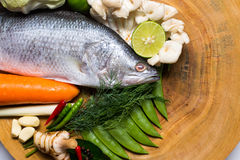 Snapper Stock Images