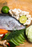 Snapper Royalty Free Stock Images