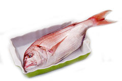 Snapper red fish Stock Photos