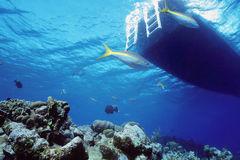 Snapper reef. Yellow tail snappers await divers below the dive boat in perfect crystal clear water stock images