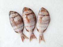 Snapper sea fish resting on the ice royalty free stock photos