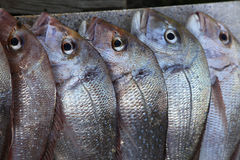 Snapper on a slab Royalty Free Stock Image