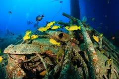 Snapper swim around underwater wreckage stock photo