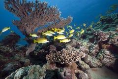 Snappers en oceaan royalty-vrije stock afbeeldingen