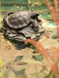 Snapping Turtle. This is a photo of a snapping turtle statue in a fountain stock images