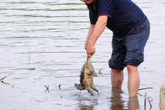 Catch the tortoise. The Snapping turtle was caught by a man Royalty Free Stock Images