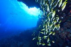 Snappners Bluelined Στοκ φωτογραφίες με δικαίωμα ελεύθερης χρήσης