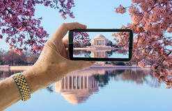 Snapshot of cherry blossoms in Washington DC royalty free stock photos
