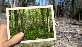 Forest memories Royalty Free Stock Photography