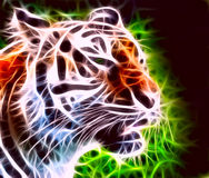Snarling tiger Royalty Free Stock Photos