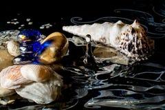 Snäckskal i vatten med reflexion och med de fallande dropparna som isoleras på en svart bakgrund Arkivbild