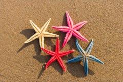 Snäckskal på stranden Royaltyfria Bilder