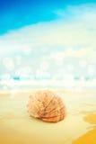 Snäckskal över havet Arkivfoto