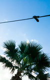 Sneakers boots hanging on a wire above palm tree. Sneakers boots hanging on a wire above green palm tree, blue sky background, sunlight shining from corner Royalty Free Stock Image