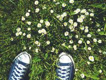 Sneakers and chamomile stock image