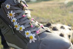 Sneakers in daisies Royalty Free Stock Photo